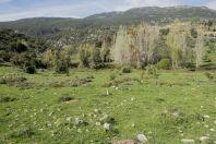 Nabi Hazuri, Golan
