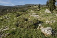 Nabi Hazuri, Golany