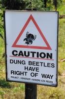 Caution! Dung beetles