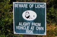 Caution! Lions!