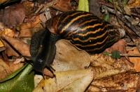 Snail, Tsitsikamma NP