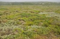 Agulhas National Park and fynbos