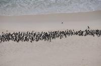 A birds, Cape of Good Hope