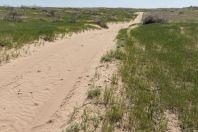 Bazoy sands