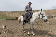 Shepherd, Bazoy