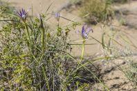 Singing dunes, Altyn Emel National Park