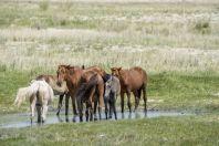 Horses, Nurum