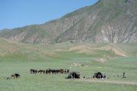 Nomads, Kara-Jygach