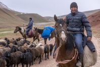 Shepherds, Kyzyleshme