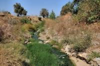 Locality of Pelophylax bedriagae
