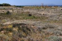 Možná lokalita Trachylepis auratus u Cape Skandari