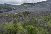 Walnut forest, Arkit
