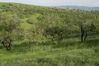 Habitat of Pseudopus apodus, Jalal-Abad