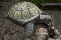 Tortoise, Kurort, Jalal-Abad