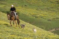 Cowboy, Karakol