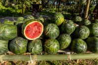 Melons, Laos