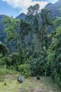 Submountain forest, Vangvieng