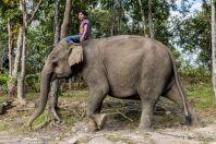Elephant, Tadlo