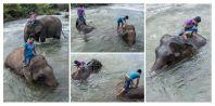 Bathing of elephants, Tadlo