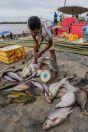 Fishes, Mekong, Nakasong