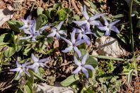 Flora, Aayoun El Siman