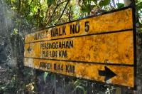 Jungle walk No.5 - Cemeron Highlands