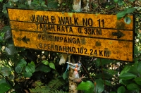 Jungle walk No.11