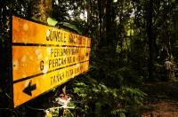 Jungle walk No.11