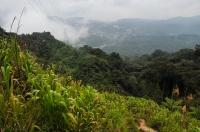 Horský tropický les, Cameronská vysočina