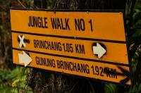 Jungle walk No.1