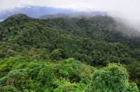 Hill dipterocarp forest, Cameron Highlands