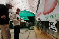 Strawberries farm in Brinchang