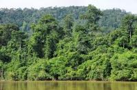 Surroundings of river Tembeling
