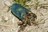 Vše je možné - Parapylochelidae, Huraa