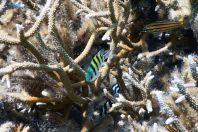 Ryby, Maledivy