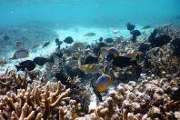 Korálový útes, Maledivy