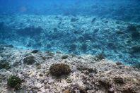 Indický oceán, Maledivy