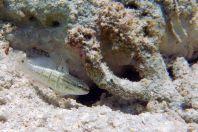 Ryba, Maledivy
