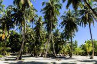 Palms, Huraa