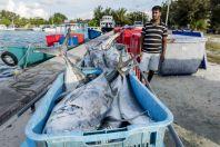 Rybář z Bangladéše, Huraa