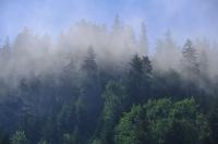 A mist, Pieniny Mts.