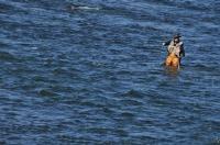 Fisherman, Dunajec river