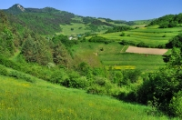 Near Lesnica