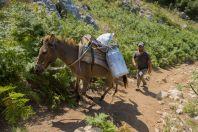 Shepherd, Kulmas Mts.