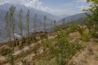 Národní Park Chitral Gol