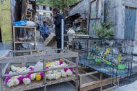 Obchod se zvířaty, Chitral