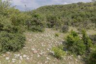Habitat, Parara
