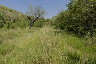 Žabí habitat, Margallah Hills, Islamabád