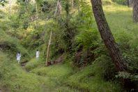 Allopaa hazarensis - habitat, Datta