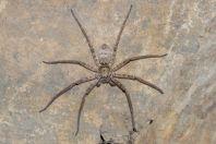 Spider, Datta